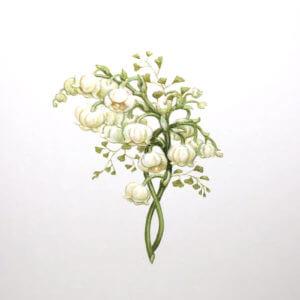 Paula Skene Designs Lily Twist condolence card or blank note card