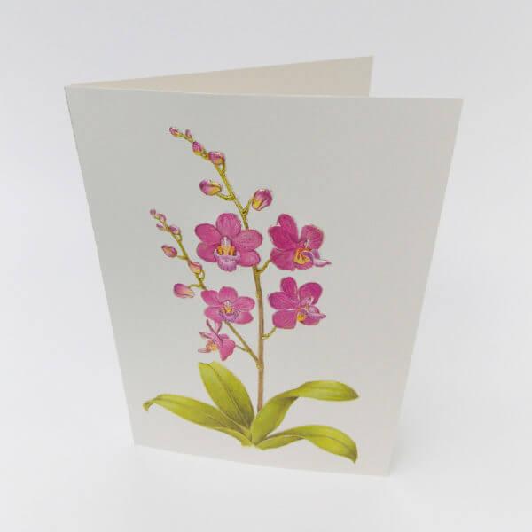 orchid condolence card 1000 pixels