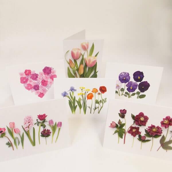 six Bottle Branch® botanical cards