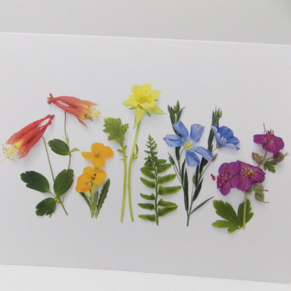Summer Flower Rainbow 1000 pixels closeup